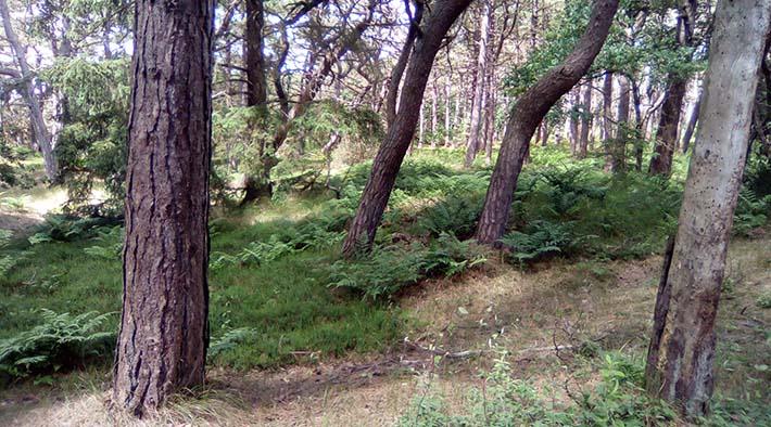 Naturerlebnisführung im Wald von St. Peter-Ording