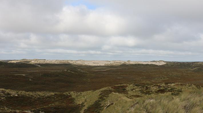 Die Wanderdüne der Lister Dünenlandschaft auf Sylt