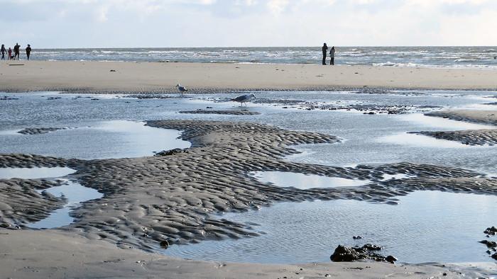Wattenmeer entdecken
