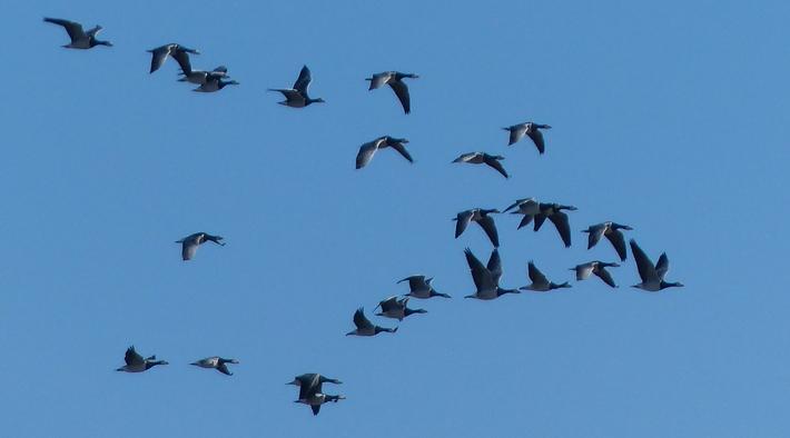 Vogelkiek am Außendeich