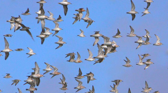 Vogelkiek in Schobüll - Die Flying Five