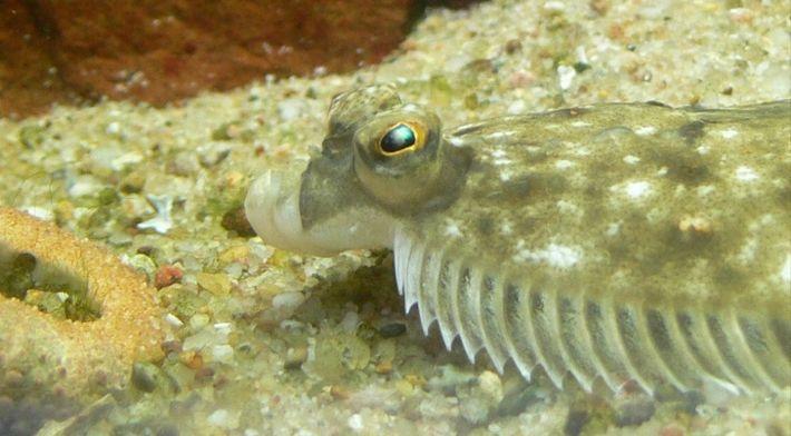Führung durch die Nationalpark-Ausstellung und Aquarienführung mit Fütterung