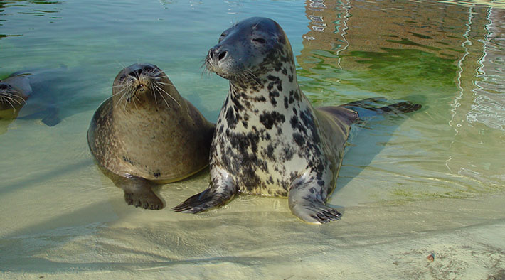 Tierische Bewohner der Seehundstation Friedrichskoog
