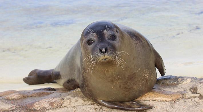Tierischer Bewohner der Seehundstation Friedrichskoog