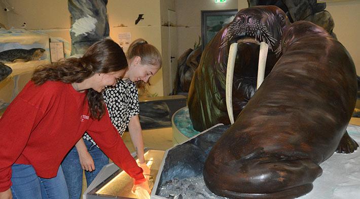 Abtauchen in die Welt der Robben