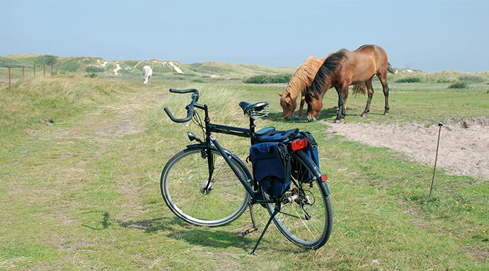 Entschleunigung pur: Mit Rad unterwegs auf Amrum