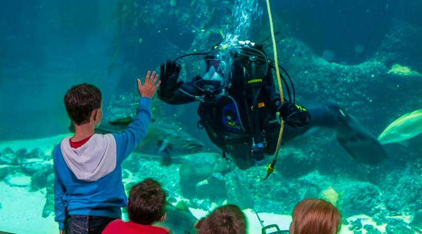 Aquarien - Vielfalt der Nordsee