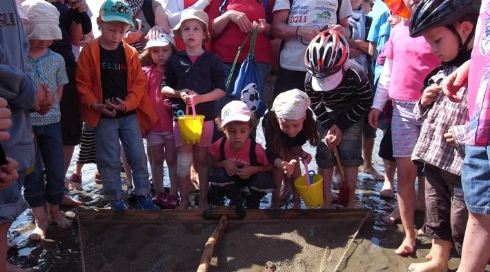 Kreativwattführung mit Krabbenfischen für Kinder und Eltern