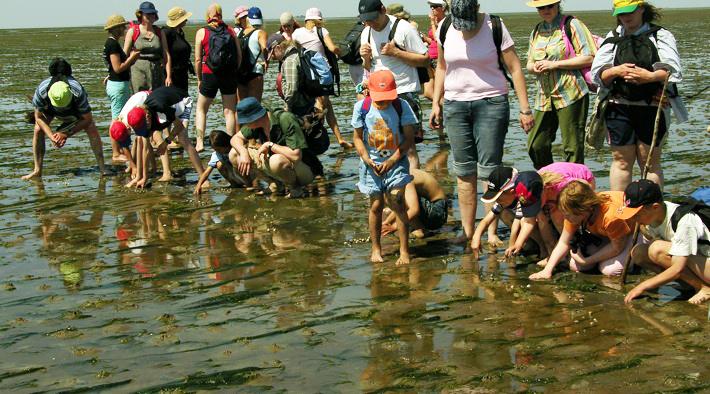 Kinder entdecken den Meeresboden bei einer Wattwanderung